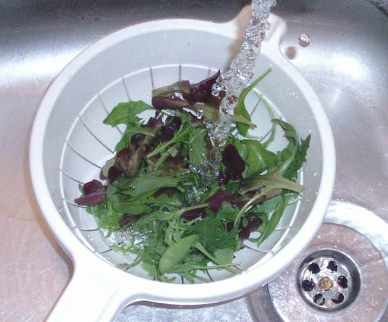 Washing mixed leaf salad