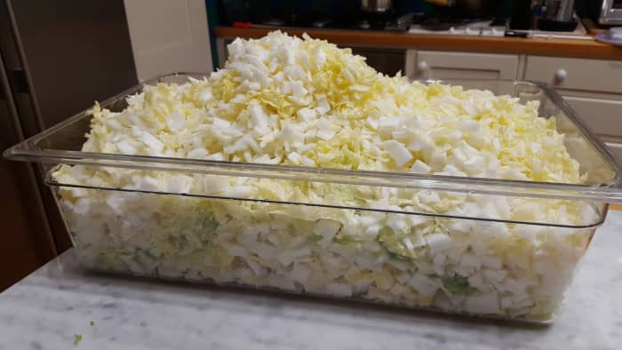 Two heads of chopped Chinese cabbage fills this large container to overflowing.