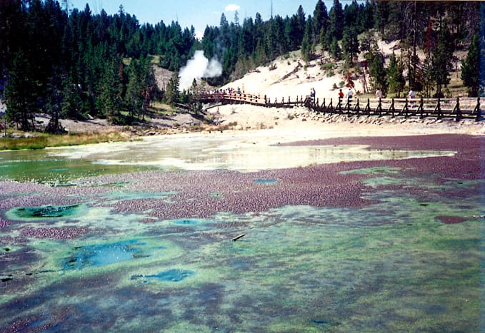 Many walkways are provided in Yellowstone National Park.