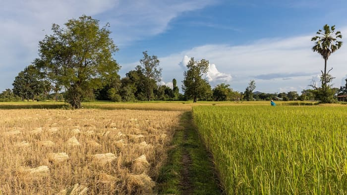 Rice field is an example of a man-made ecosystem.
