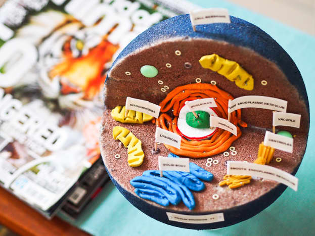 There are so many different ways to build an animal cell model!