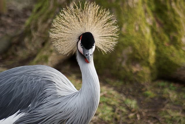 the-most-beautiful-animals-part-2