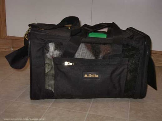 airline-approved-cat-carrier