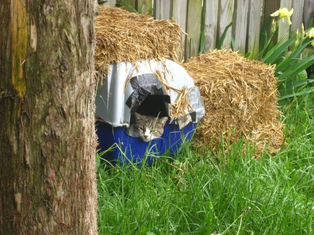 Even simple cat shelters—such as this one made out of an old, covered litter box and lined with Mylar—can be big in helping outdoor cats make it through winter.
