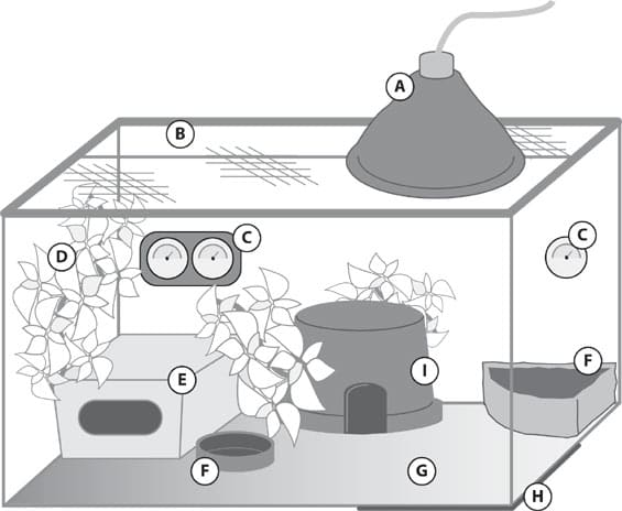 Here's a diagram of a tank setup. Notice the hides, bowls, and lighting.