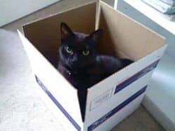 Black cat playing in a priority mail box.