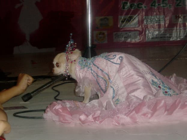 dog-fashion-show-a-different-experience-both-for-humans-and-dogs