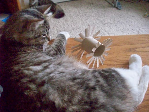 Yuba spies his new toy
