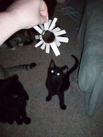 Imp anticipating his new toy.
