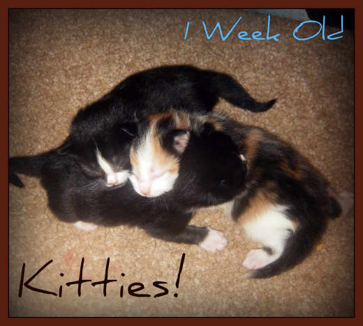 The kittens at 1 week old. (technically 1 week and 1 day)
