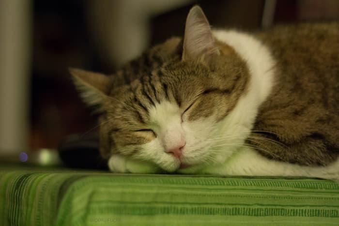 Meow I lay me down to sleep ...