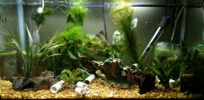 15 gallon. Two internal air filters (one DIY), heater, cut PVC, silk plants, some small driftwood, and small gravel. Holds Cajun Dwarf Crayfish, trumpet snails, and a Nerite snail. Have had ghost shrimp and guppies in the tank as well.