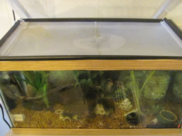 Clear plastic mesh can be used to create a cover or lid for a small tank.