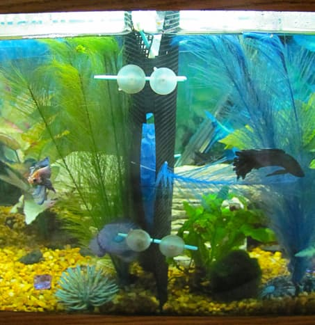 Mesh makes a great tank divider for betta fish.