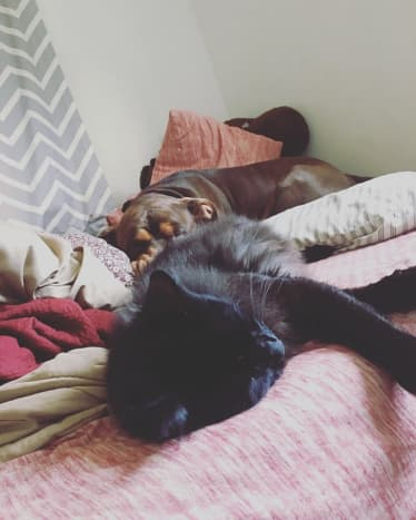 Colby the cat and Moose the dog