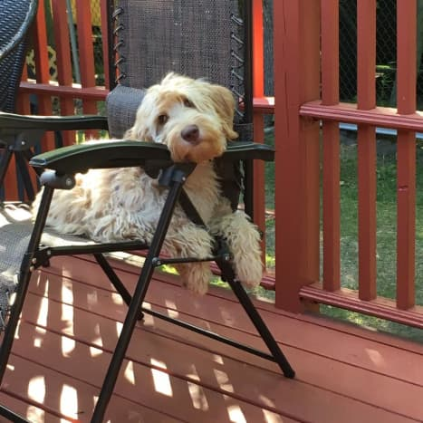 Belle hanging out in her chair after spending an afternoon playing outside!