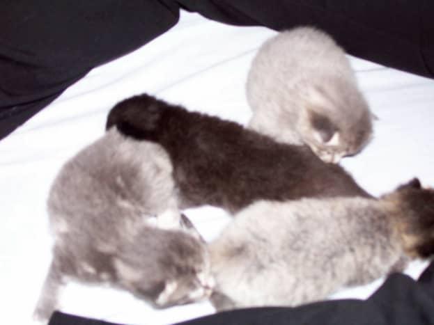Ash's babies-Misty, Dusty, Knight, Salty