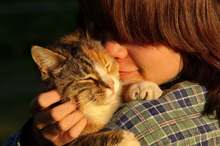 Cats are more affectionate than they appear.