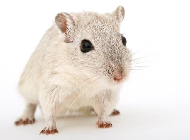 Ensure that your hamster has proper habitat enrichment.