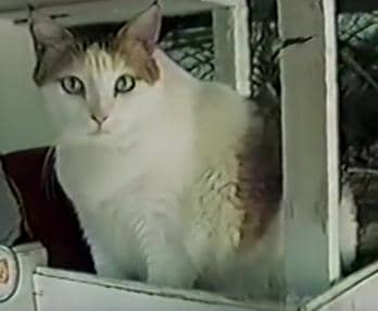 Crème Puff died at age 38.