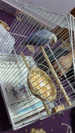 We bought a canary nest assuming it to be a lovebird nest before.