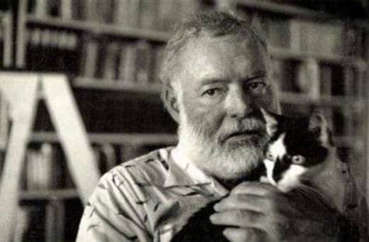 One of the many six-toed cats who roamed the Hemingway House in Key West, Florida while the author was alive.