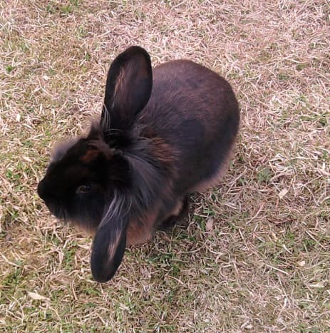 'Cocoa Pop' lifting an ear and hearing something in the distance as she munches the grass happily!