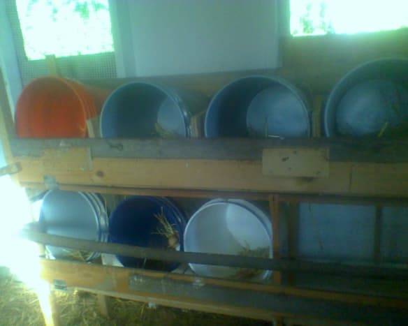 Nesting/Brooding buckets filled with hay