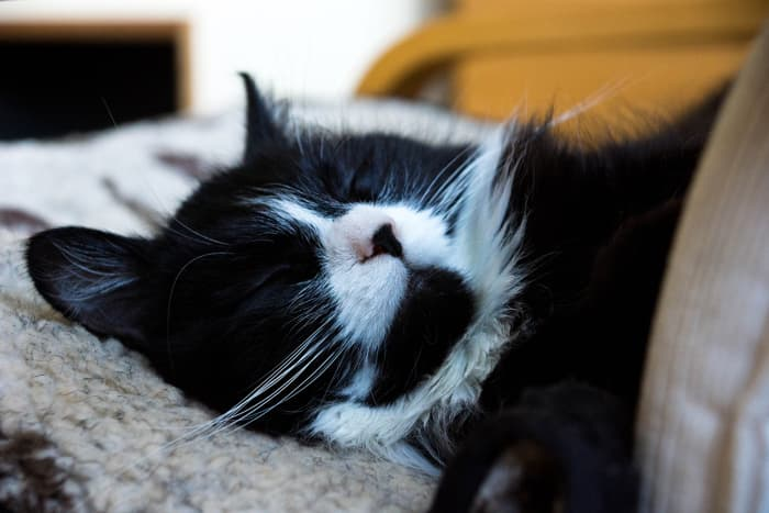 Every sleeping cat is an angel.