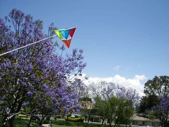 Whee! Jacarandas in May rock. (Yes, they really are that color.)