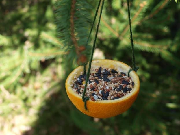 Orange peel bird feeder tutorial.