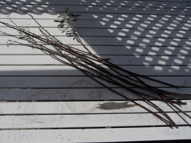Cut willow withes or straight thin branches.