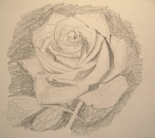 Final sketch of a rose