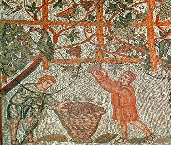 Vinalia was celebrated twice a year. Some theorize that the earlier celebration involved the drinking of new wine, while the latter involved blessing the following year's supply.