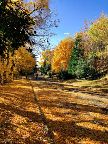 The fall foliage at the park near my house is simply mezmerising.