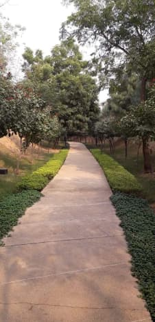 Many walking paths are lined with trees, grass, bushes, and flowers. Enjoy the sights and the smells as you move.