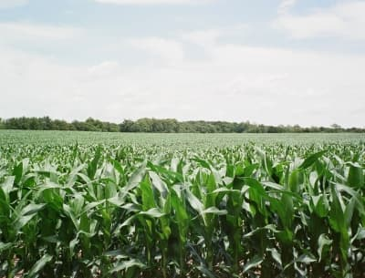 Corn and bean fields surround Mulberry.