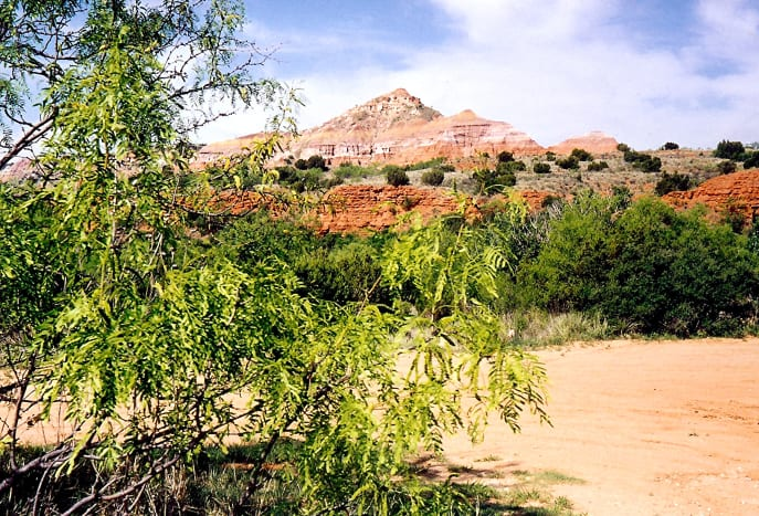 Gorgeous scenery in the Palo Duro Canyon of Texas