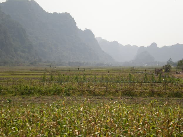 Cat Ba's National Park Plantations. UNESCO World Heritage Site of Halong Bay in Vietnam.