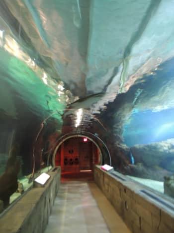 Tunnel walkway under the aquarium