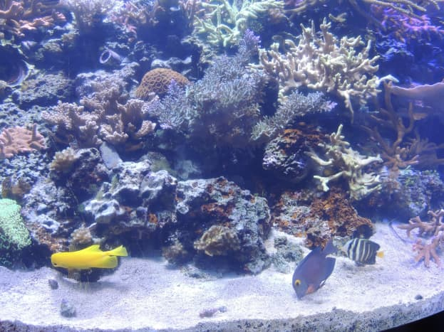 Aquarium just outside of the Seas with Nemo and Friends ride at Epcot