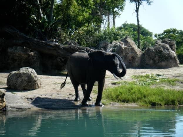 top-ten-things-to-do-at-walt-disney-world-animal-kingdom