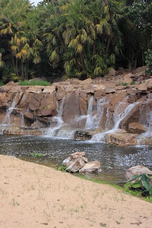 Behind the attractively landscaped rockery and stream of the Caribbean Zone is a bank of Coconut Palms