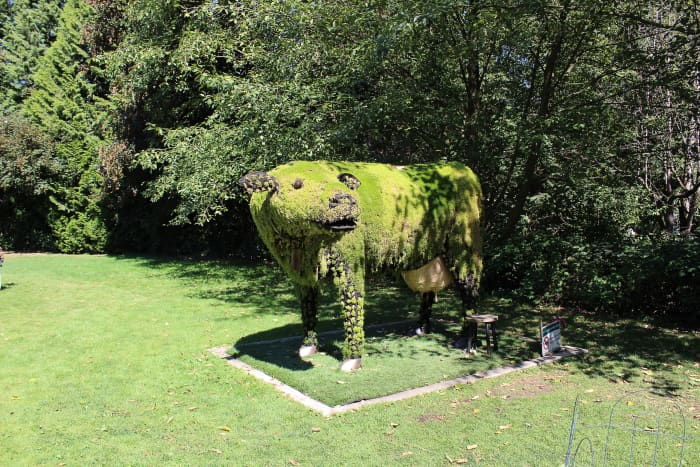 The cow in the meadow