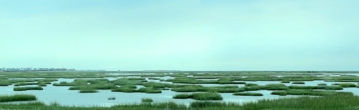 A small part of a much larger salt marsh as you near Galveston on US Highway 45