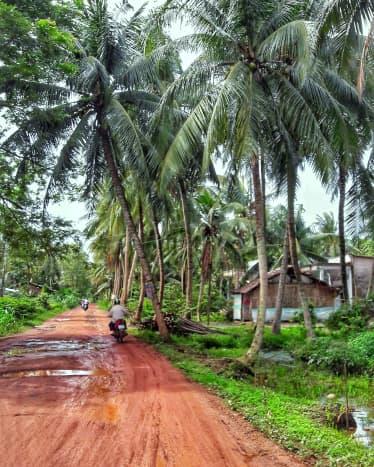 Ben Tre is such a coconut jungle