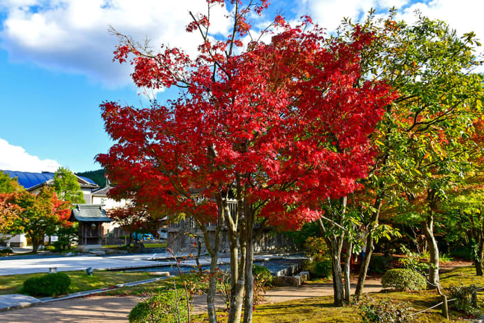 It was a cool and lovely walk to Kyushu National Museum. Passing by blazing autumn foliage was also hands-down a high point of this Fukuoka day trip.