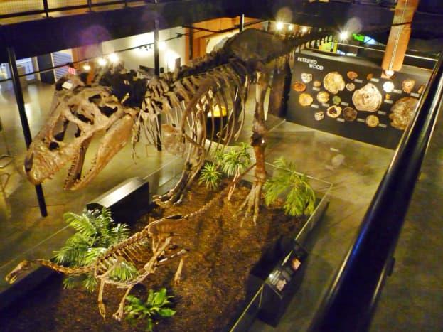 Looking down at T. Rex dinosaur + Struthiomimus