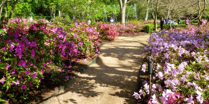 Walkway through the gardens