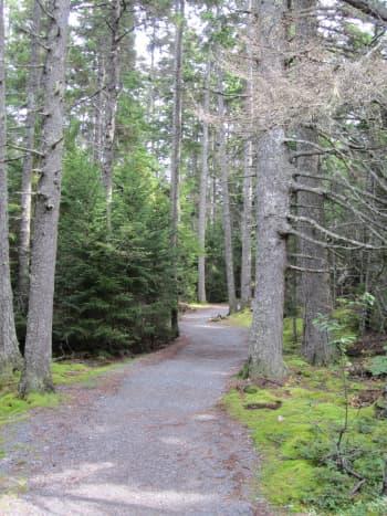 Wonder Land Trail